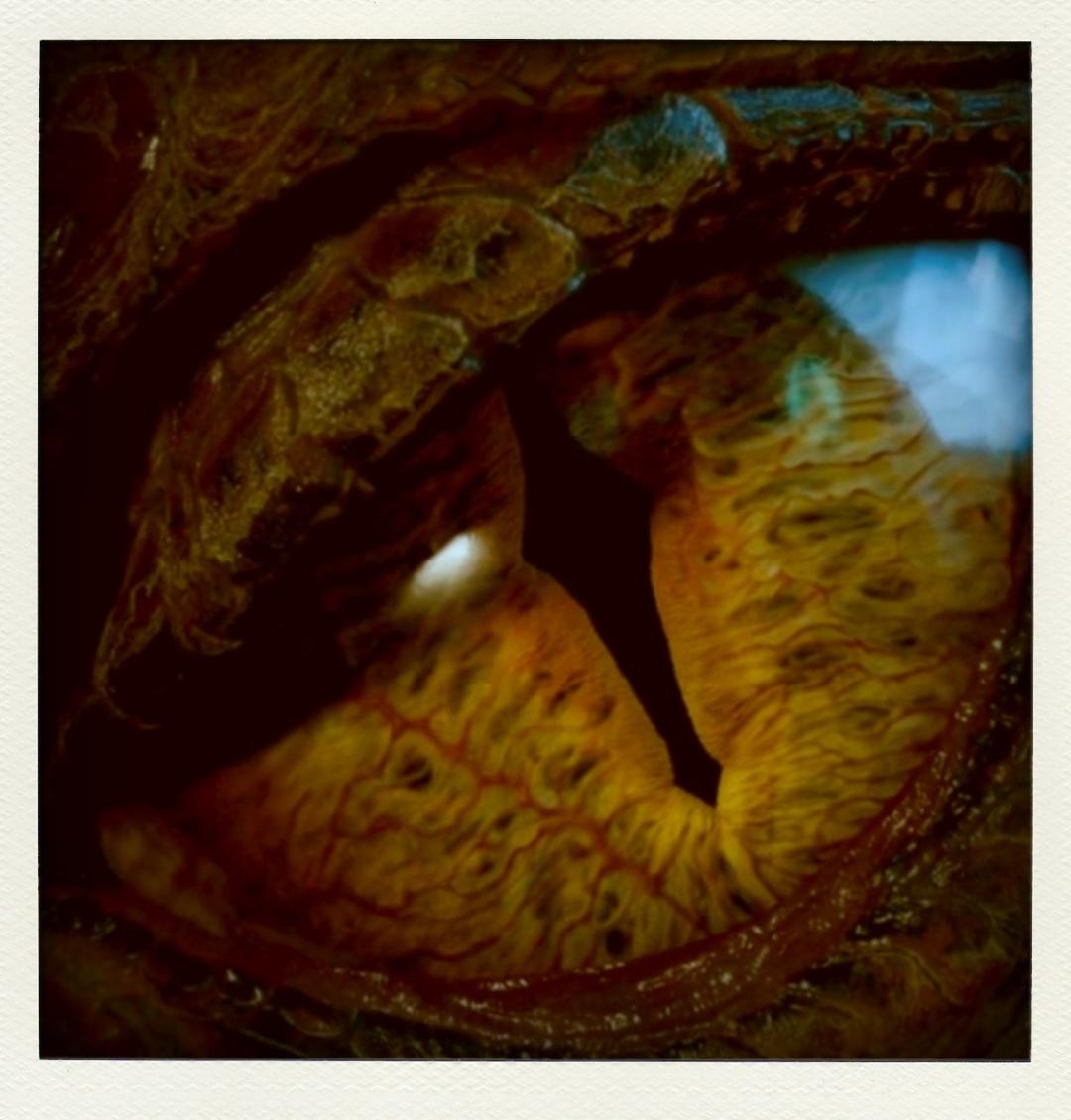 The Hobbit: The Desolation of Smaug @ www.cinemascream.co.uk